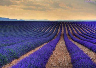 Provenza Francia, in viaggio alla ricerca di profumi