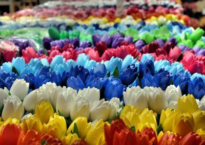 Tour Olanda in fiore: profumi e colori in mezzo ai tulipani